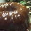 Double-Chocolate Rum Cake - from the Cake Doctor Book