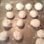 Italian Snowball Cookies Or Russian Tea Cakes