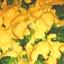 RICE-BROCCOLI-CHEESE CASSEROLE